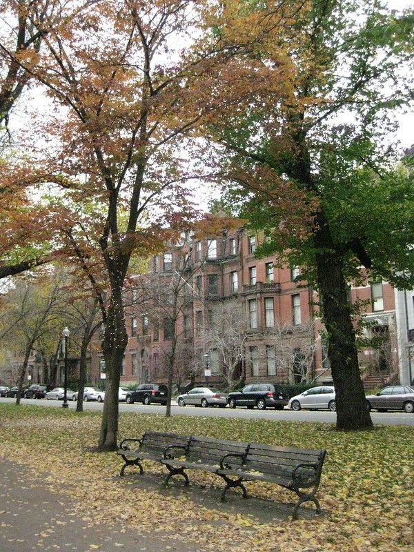 A bench  and trees in the park section of Commonwealth Avenue, Boston, with brownstones in the background.