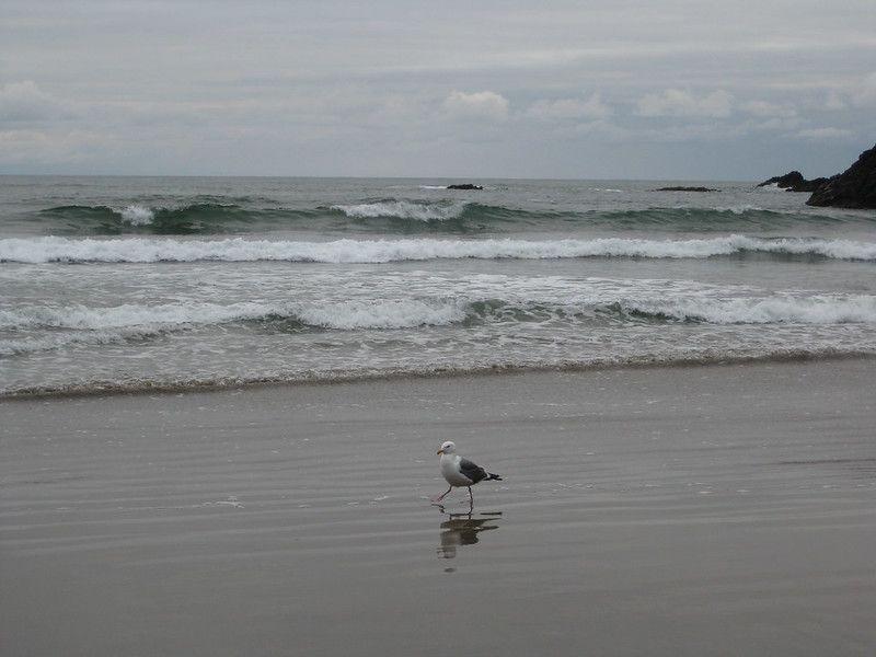 A seagull on Cannon Beach in Oregon